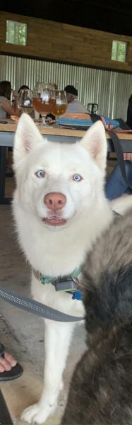 White Husky at Hawkins Farmhouse Ales